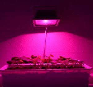 Светодиодные светильники и прожекторы для растений.