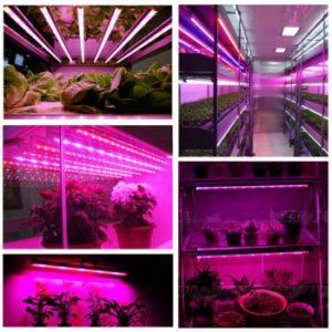 Светодиодные ленты для растений